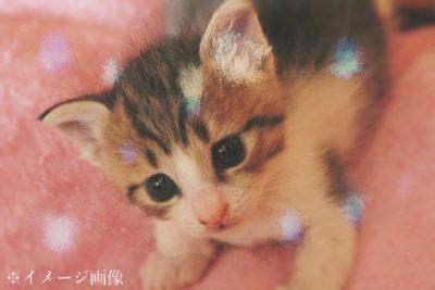 子猫のようにかわいかった新人ホストが…